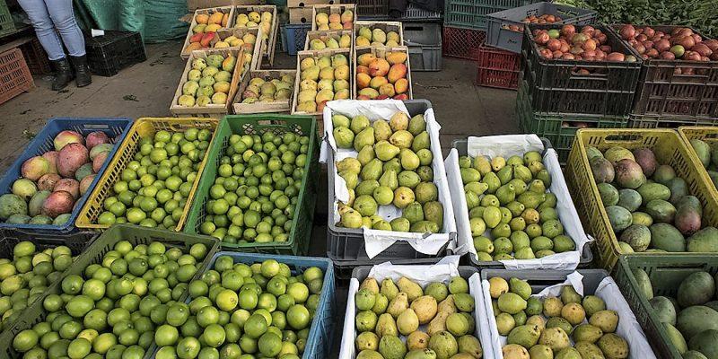Precio de los alimentos fue el motor que jalonó descenso de la inflación en agosto 1
