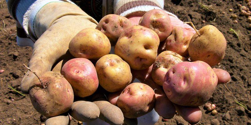 Esta semana que concluye subieron las hortalizas frutas y tuberculos