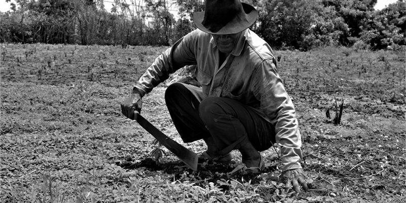 Adulto mayor que fue víctima de las FARC y las AUC recupera su tierra en La Palma