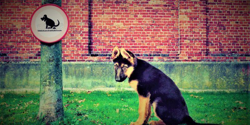 Comparendo a propietario de mascota que no cumplia normatividad de animales