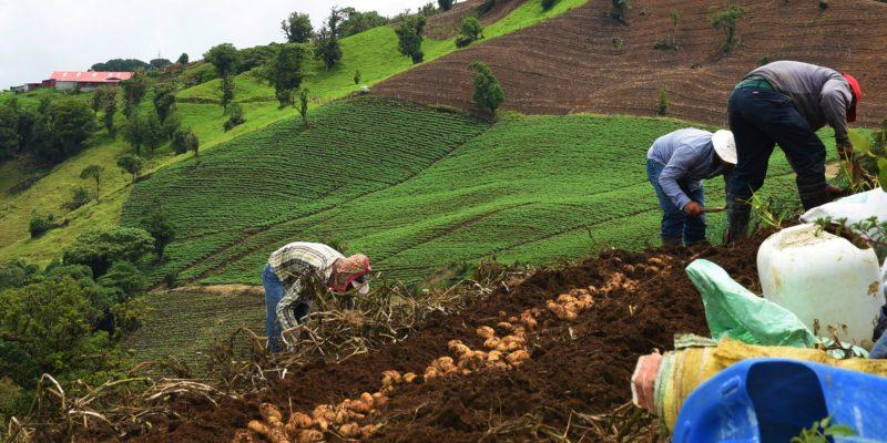 Campesinos de Cundinamarca al parecer se contagiaron de covid 19 en Corabastos copy
