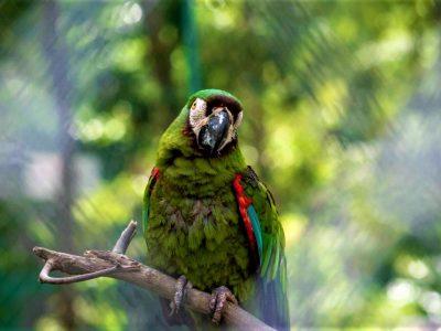 La polvora ocasiona grave dano a la fauna y la flora
