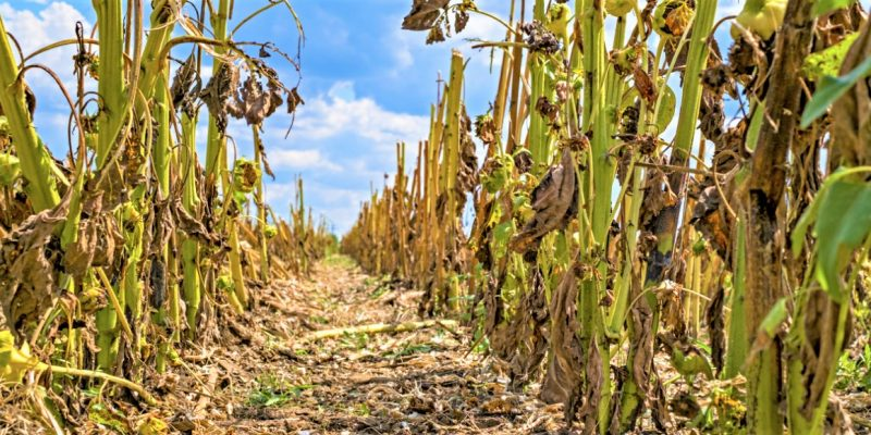 Alcaldes y gobernadores deben cumplir con mitigacion y adaptacion al cambio climatico