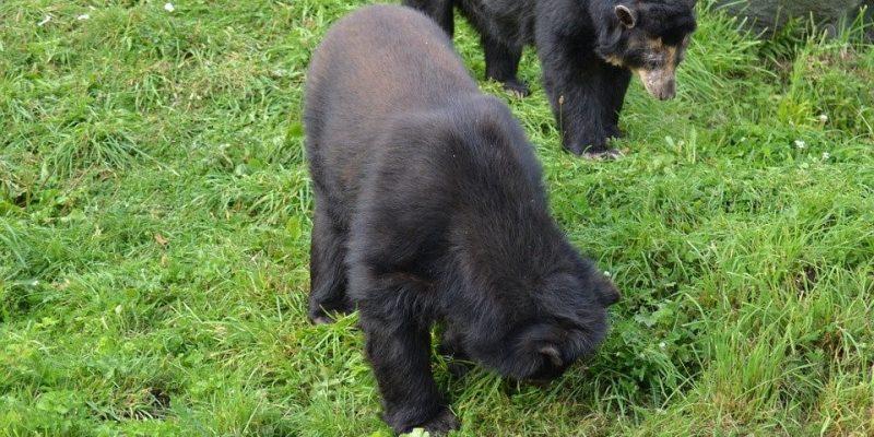 Por maltrato animal cierran dos centros de recuperacion de fauna en Cundinamarca