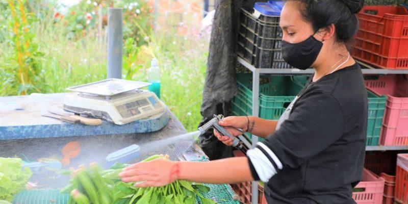Certificadas las primeras fincas agroecologicas de Chia