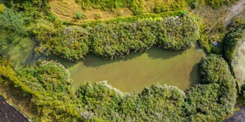 Hallan nuevo humedal en la Reserva Thomas Van der Hammen