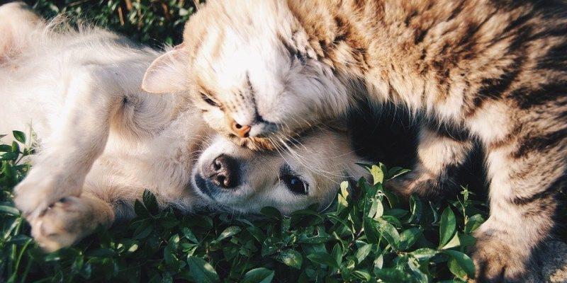 Jornada de vacunacion gratuita para mascotas en Zipaquira